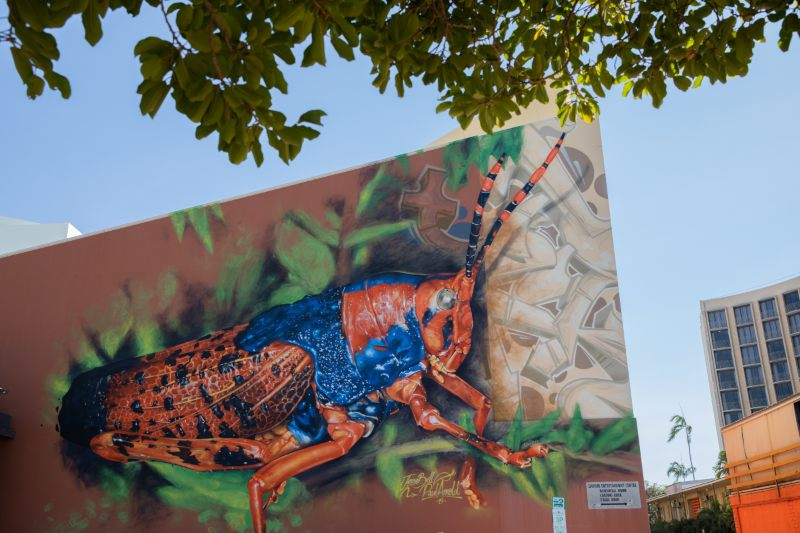 Leichhardt's grasshopper - a collaboration between famed local photographer, Paul Arnold, and artist, Jesse Belle