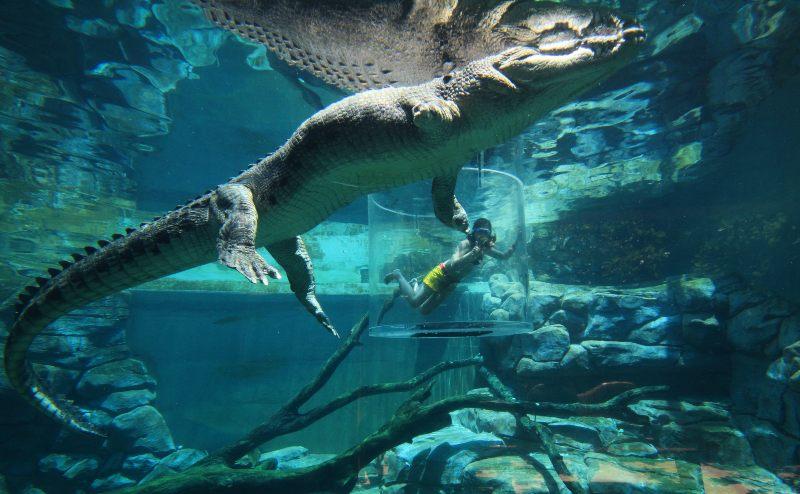 Crocosaurus Coves Cage of Death Credit Shaana McNaught