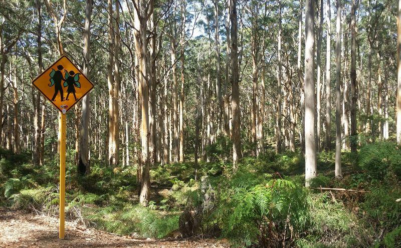 Margaret River Forest Western Australia