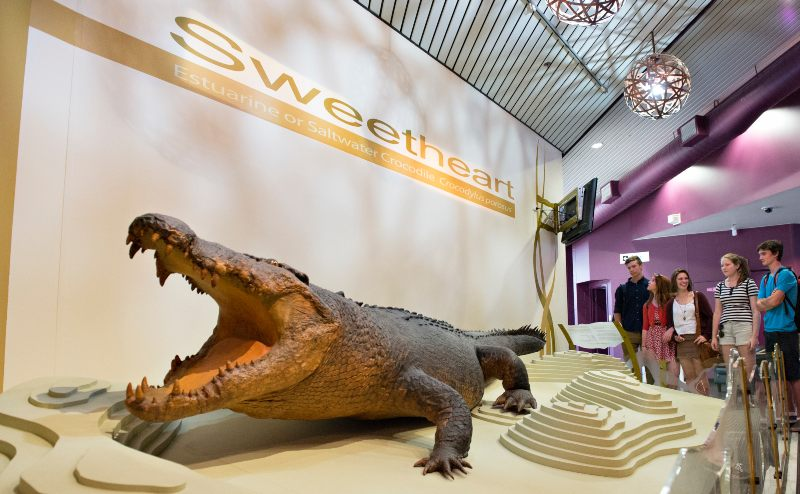 Sweetheart Croc - Things to do in Darwin