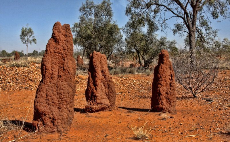 termites Mounds near Litchfield Northern Territory