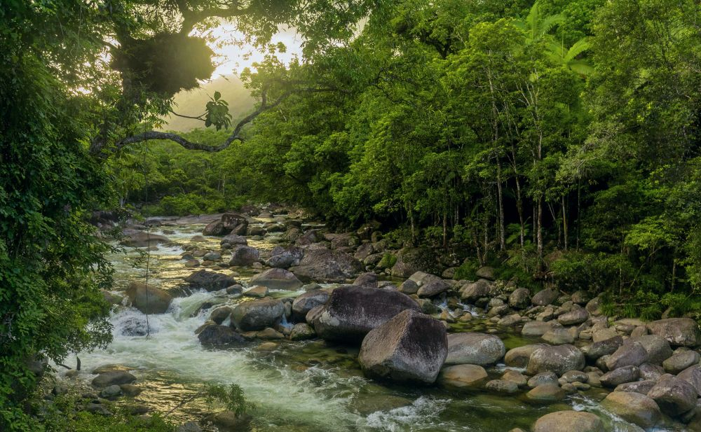 Mossman Gorge - river in Daintree National Park