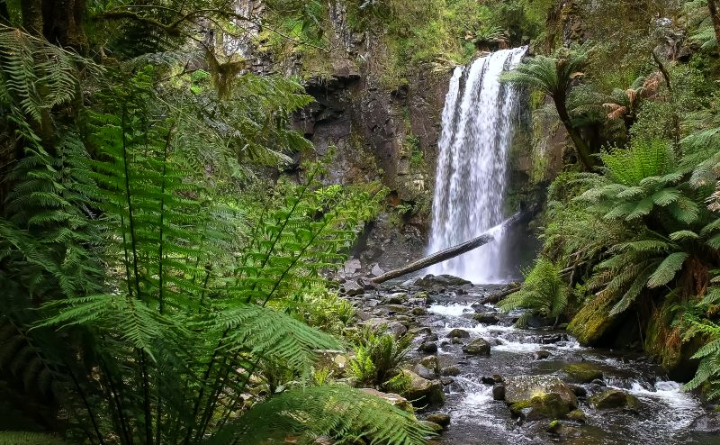hopetoun falls and a tree fern near the great ocean road in victoria, australia