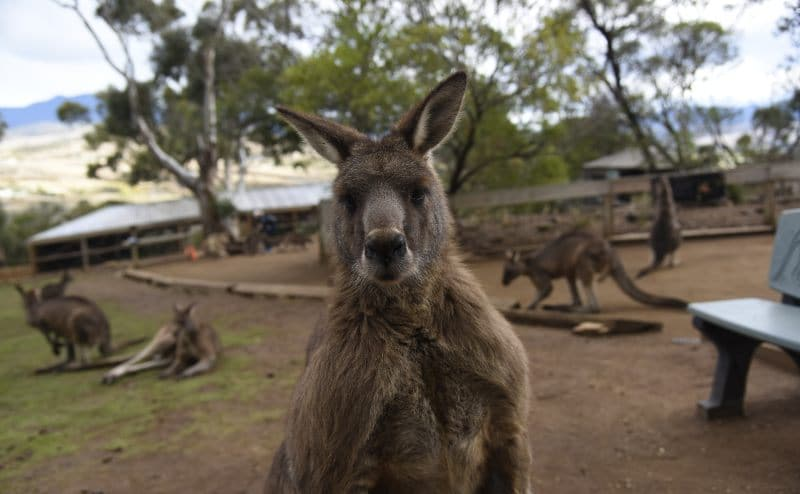 Hobart Day Tour to Bonorong
