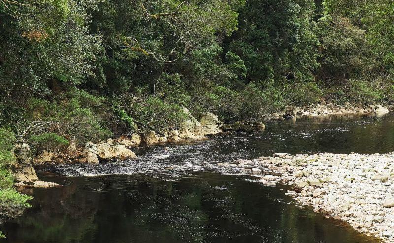 The black river in the tarkine rain forest of tasmania