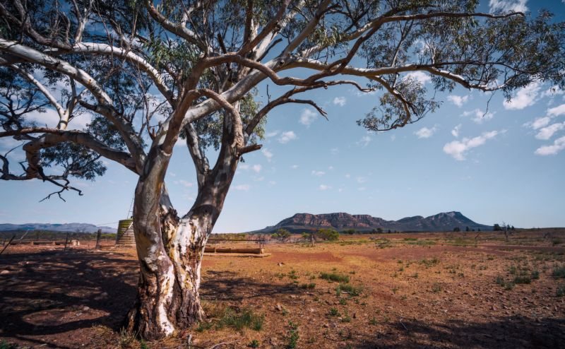 Flinders Ranges National park in Australia
