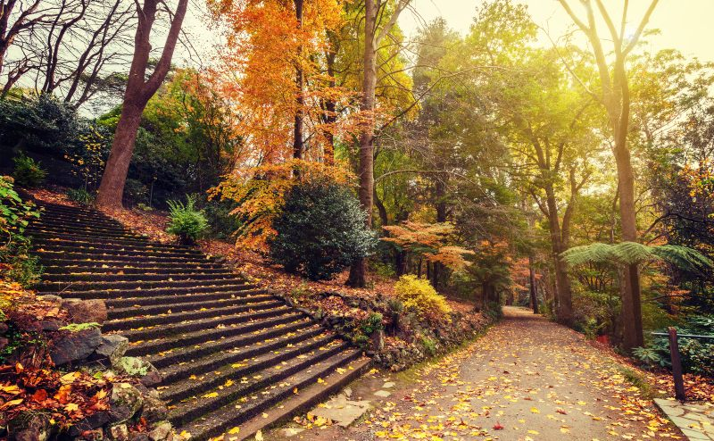Autumn landscape with long staircase and footpath. Alfred Nicholas Gardens, Australia