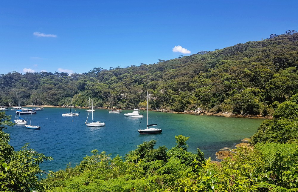 Boats in Taylors Bay Sydney Harbour