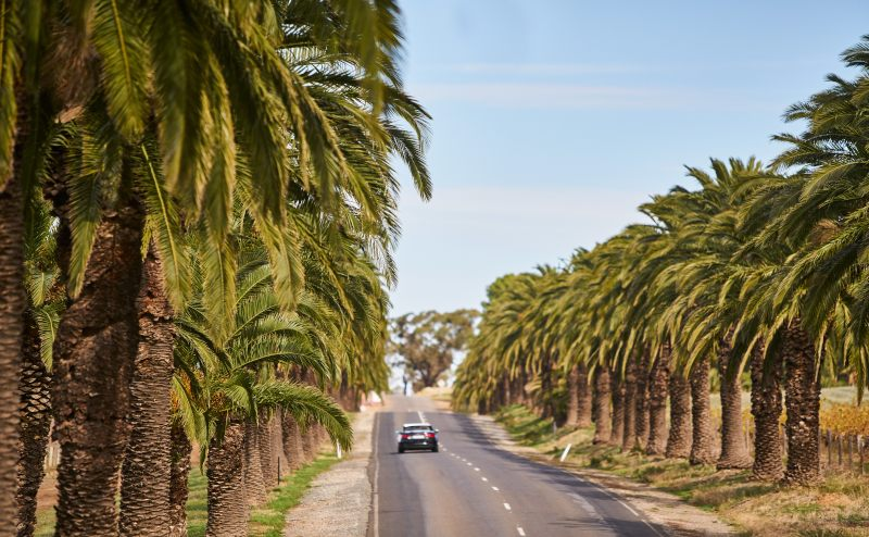 Seppeltsfield Road Credit South Australian Tourism Commission