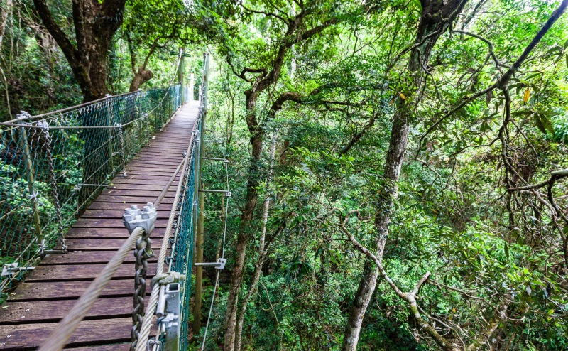 Lamington tree top walkway
