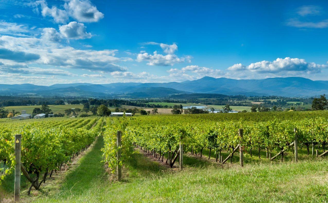 Australian Wine Regions Yarra Valley