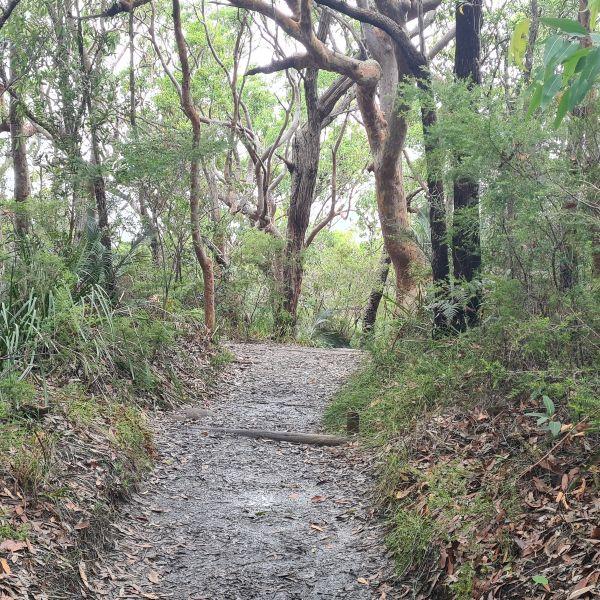 Bouddi Track Central Coast Walk