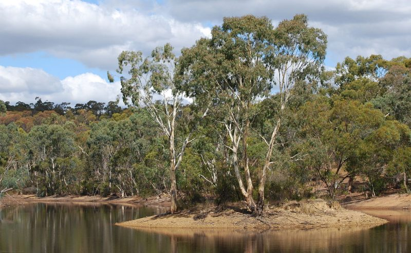 """<a title=""""Peripitus / CC BY-SA (http://creativecommons.org/licenses/by-sa/3.0/)"""" href=""""https://commons.wikimedia.org/wiki/File:Para_Wirra_Park_-_Lake_and_Island.JPG""""><img width=""""512"""" alt=""""Para Wirra Park - Lake and Island"""" src=""""https://upload.wikimedia.org/wikipedia/commons/thumb/d/d0/Para_Wirra_Park_-_Lake_and_Island.JPG/512px-Para_Wirra_Park_-_Lake_and_Island.JPG""""></a>"""