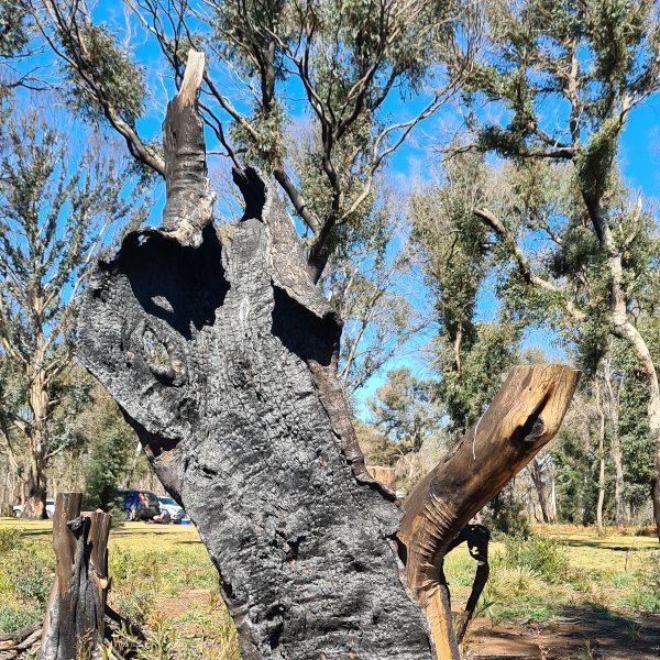 Bushfire damage Ebor National park