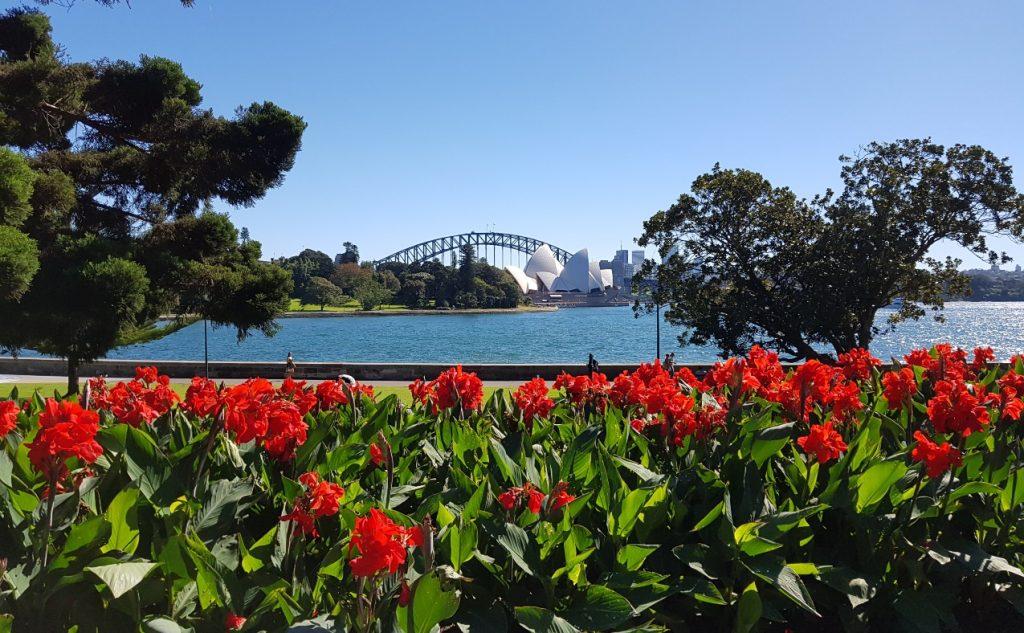 Royal Botanic Garden Sydney red flower view