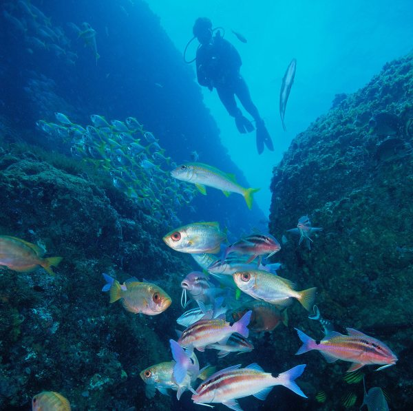 Scuba Diving in Coffs