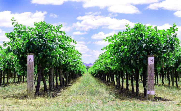 Wine region in Mudgee
