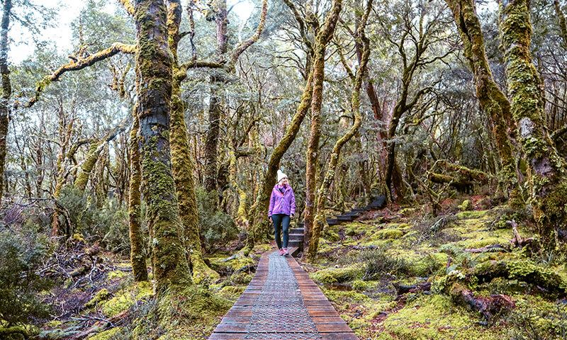 Pencil Pines Falls walk near Peppers Cradle Mountain Lodge Inspire Family Travel 1 1