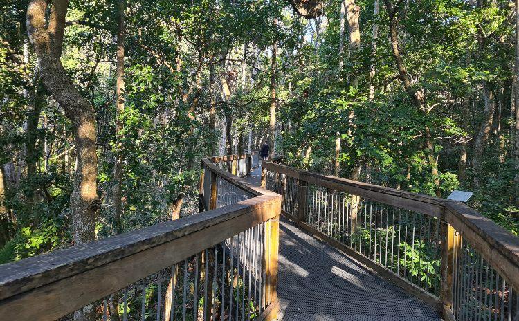 View of Sea Acres Rainforest raised walkway
