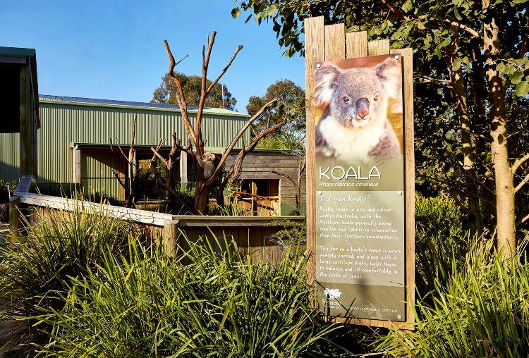 162679 3 Symbio Koalas