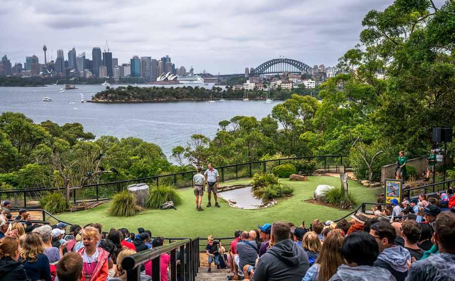 Bird Show at Taronga Zoo Sydney Depositphoto licence