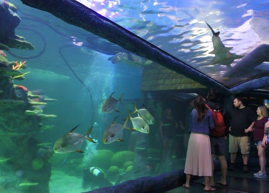 Sydney Aquarium roof