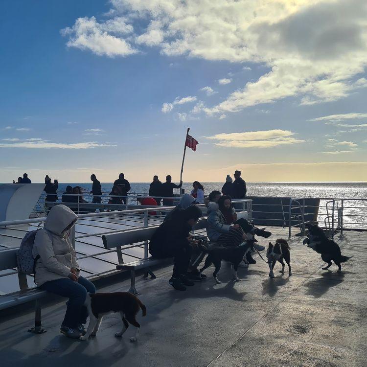 Dogs on sealink ferry Kangaroo Island