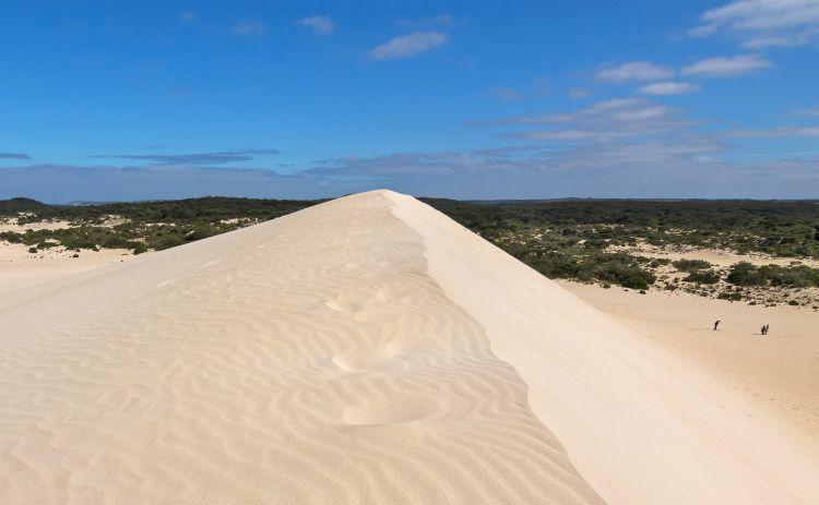 High sand hill ridge with blue sky at Little Sahara white sand dune Kangaroo Island