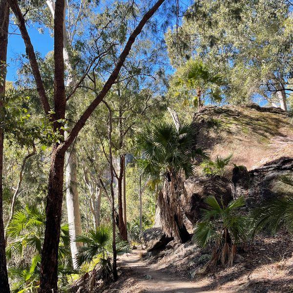 Hiking trail Carnarvon Gorge