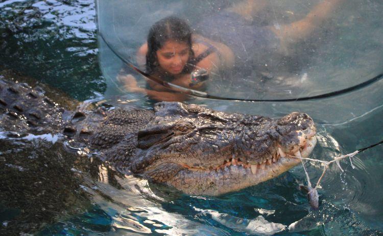 Crocodile diving in Dawrin