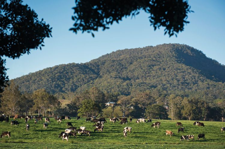 155613 3 Murwillumbah Tweed Valley Destination NSW
