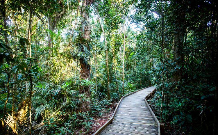 Dubjubi boardwalk Daintree Queensland
